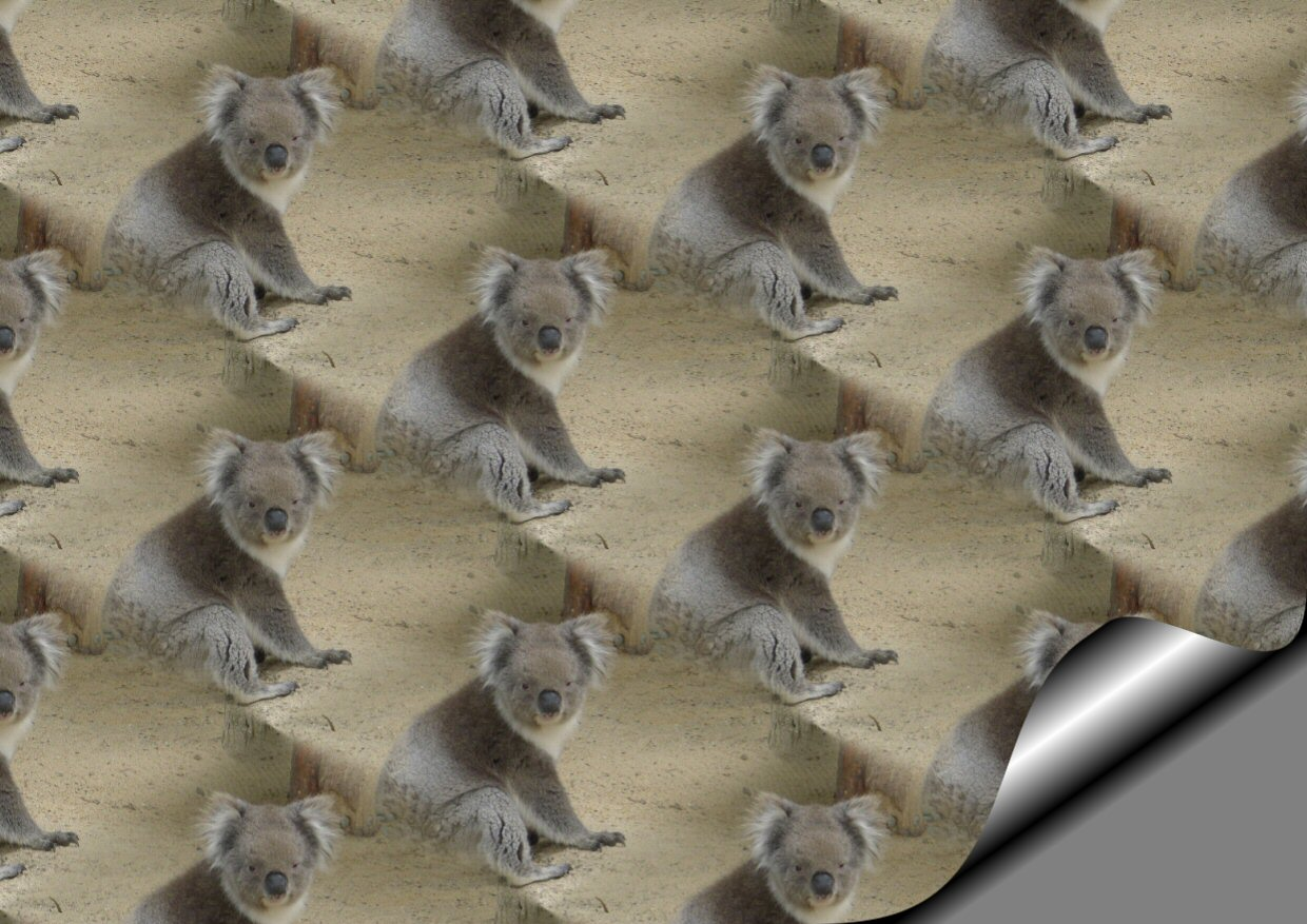 koala bear essays coursework writing service nmhomeworkqufv sgoods me  a koala bear essays the koala resembles a bear but is actually a marsupial a