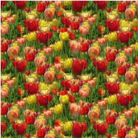 Free Tulip Design Backing Paper to download.