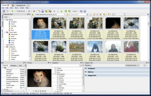 XnViewMP Media Browser Viewer and Coverter