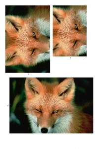 Fox Themed Pyramid Paper