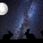 Easter Silhouette Rabbit Landscape Paper.