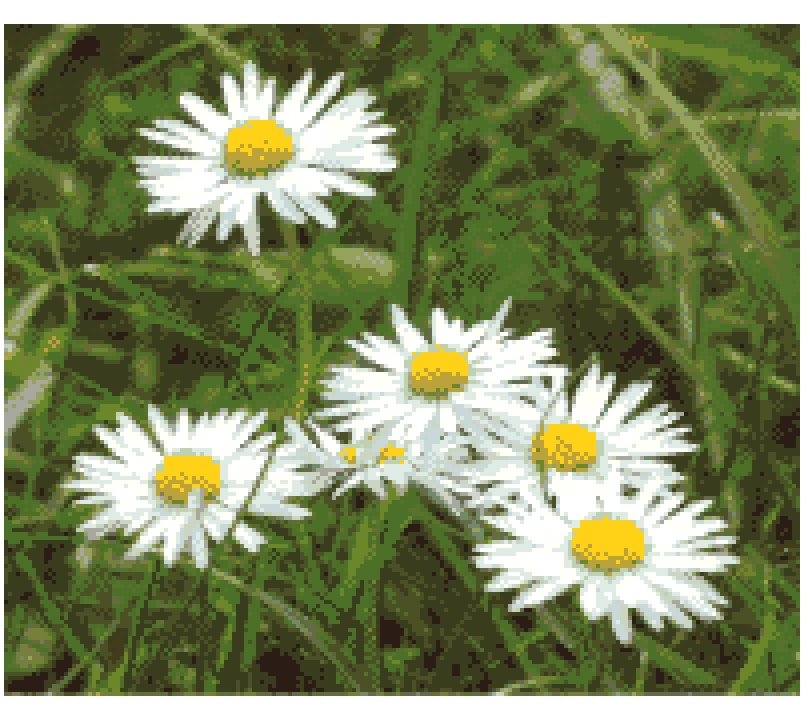 Daisies Cross Stitch.