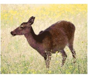 Deer 2.