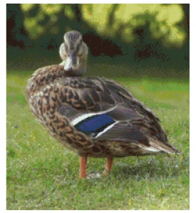 Duck Cross Stitch Chart.