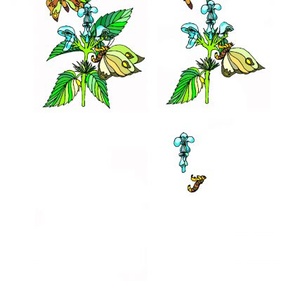butterfly_decoupage2