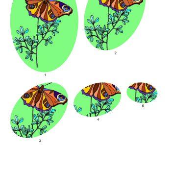 butterfly001_2