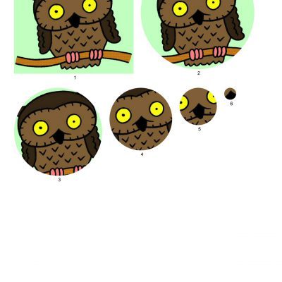 owl_001