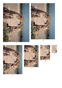 Cheetah Card Making Papers.