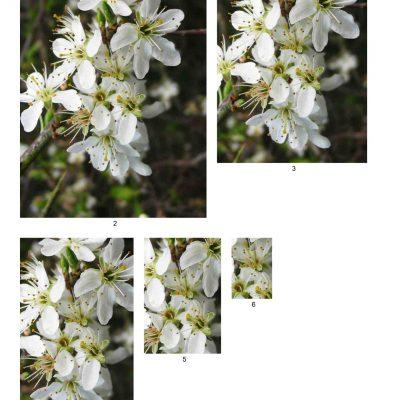 blossom05_lg_rec_b