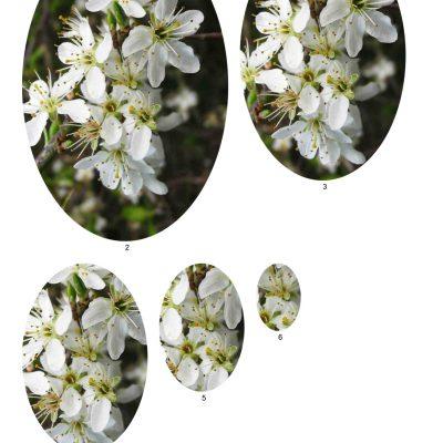 blossom06_lg_oval_b