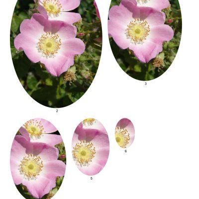 flower05_lg_oval_b
