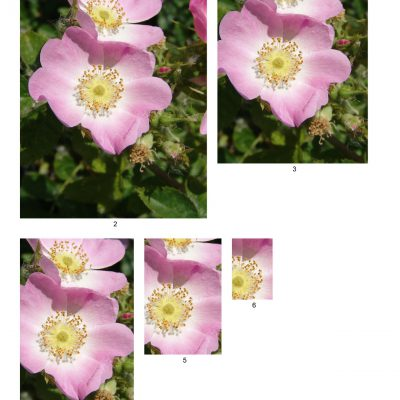 flower06_lg_rec_b