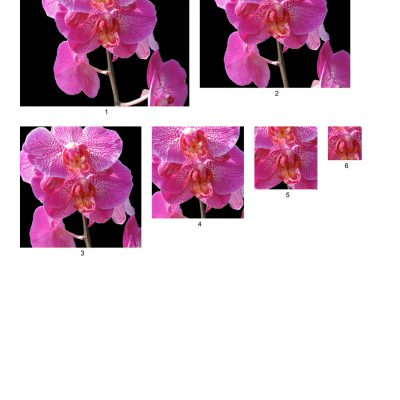 orchid01