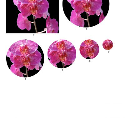 orchid03