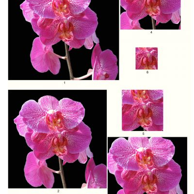 orchid05_lg_square