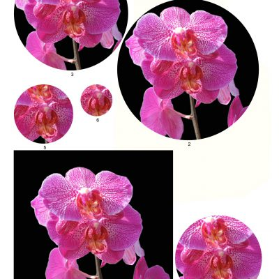 orchid06_lg_circle