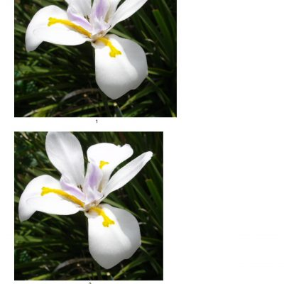 orchid18a