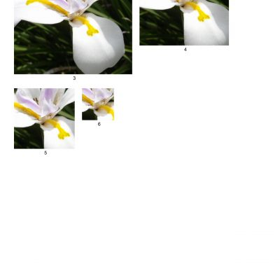 orchid18b