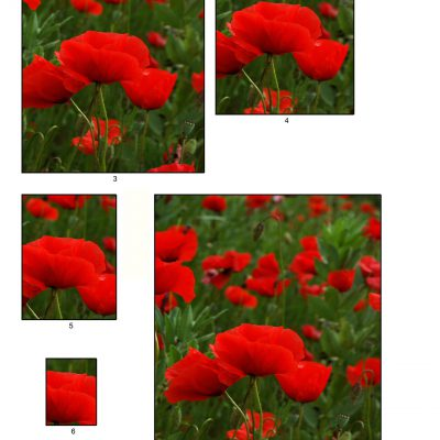 poppies05_lg_rec_b