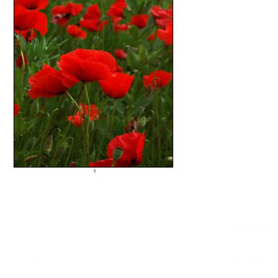 poppies06_lg_oval_a