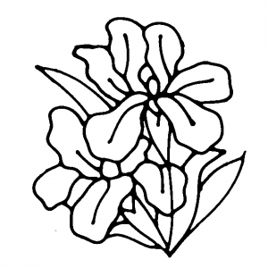 Flower Digi Stamps.