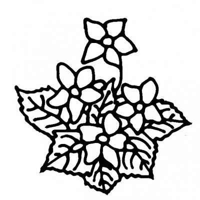 flower_new