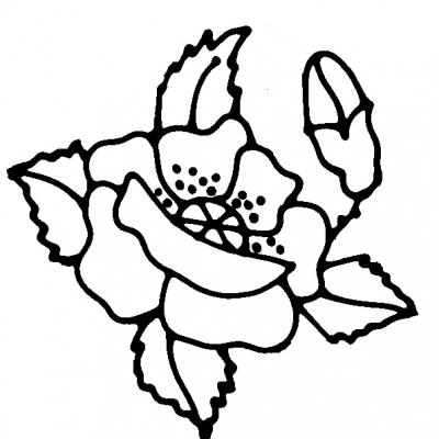 flower_poppy