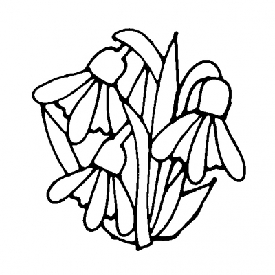 flower_snowdrop