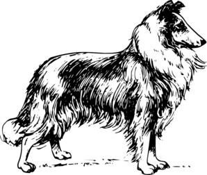 collie digi stamp.